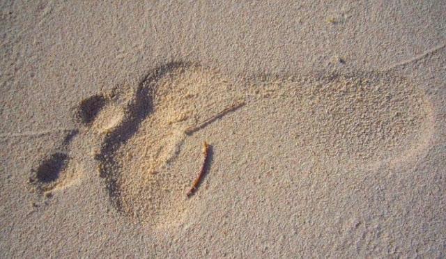 Tapak kaki Ledru