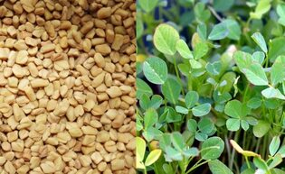 health and beauty benefits of fenugreek seeds