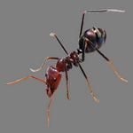 ant in spanish