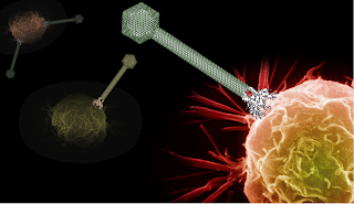 Imagen del Bacteriófago y la célula cancerígena