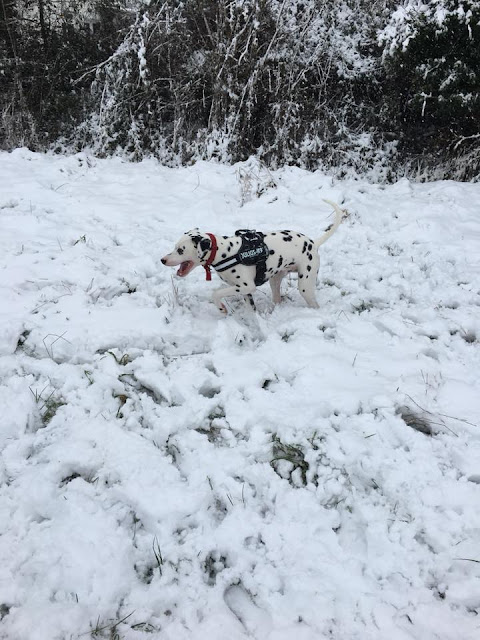 The 10th Day of Christmas - Snow!