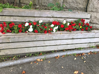 Red petunias and white roses in the Newfoundland War Memorials built in planters.