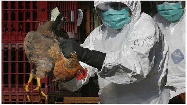 Suspicion de grippe aviaire à Djagble