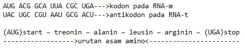 kodon antikodon