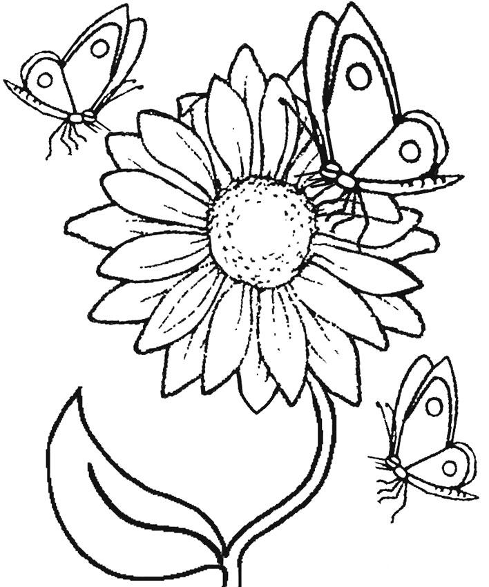 Sketsa Gambar Mewarnai Bunga Matahari Anak Tk Paud Sd Terbaru