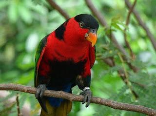 List Harga Saat Ini Terbaru Pakan Burung Paruh Bengkok Terlengkap