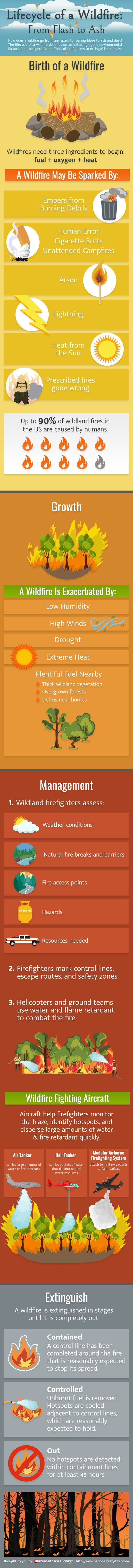 Lifecycle of a Wildfire: From Flash to Ash #infographic #Wildfire #Fire #Lifecycle #Flash to Ash