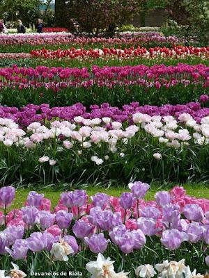 Flores e tulipas na Holanda - Keukenhof
