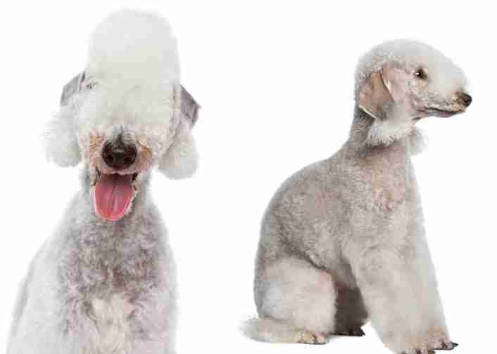 Top Ten Strange Dog Breeds
