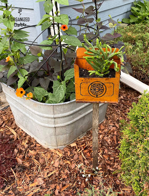 Photo of a repurposed metal container planter on a stake