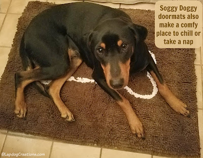 doberman mix rescue dog soggy doggy doormat