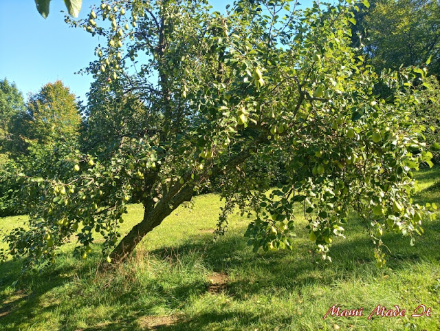 Birnenbaum - Pear tree