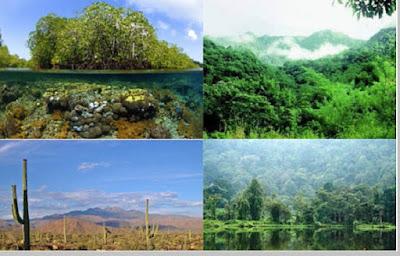 Keanekaragaman Hayati Tingkat Ekosistem - pustakapengetahuan.com