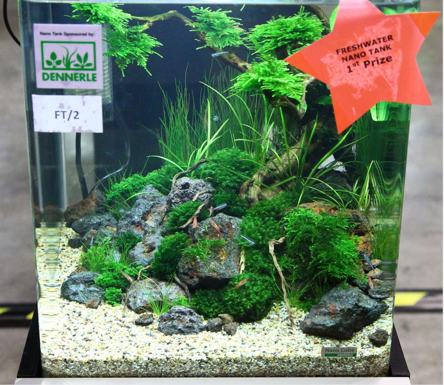 hồ thủy sinh mini chơi rêu