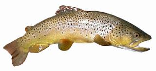 trout-www.healthnote25.com