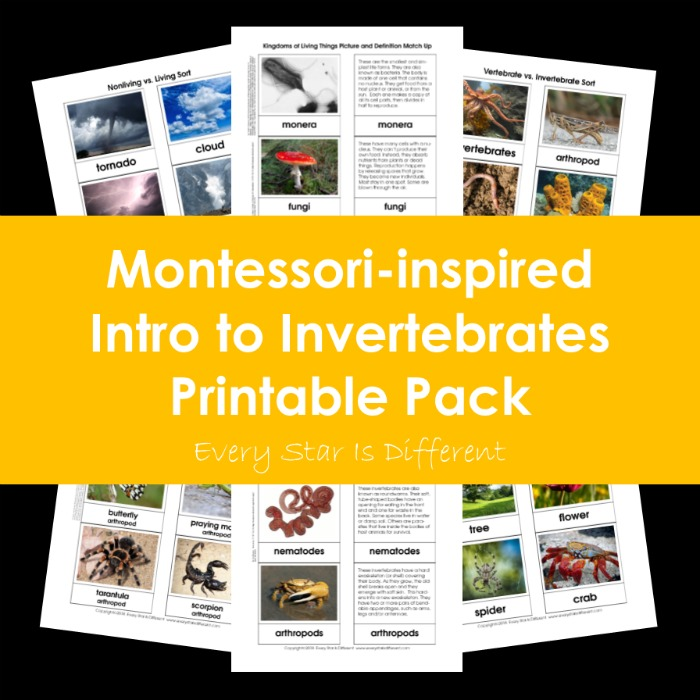 Montessori-inspired Intro to Invertebrates Printable Pack Bundle