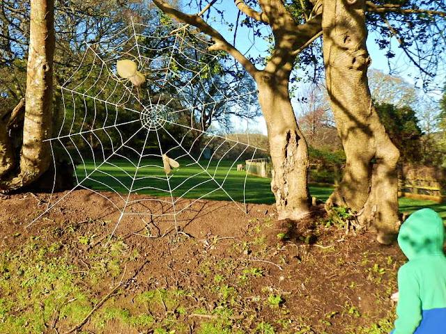 Pinetum Gardens, Holmbush, St.Austell, Cornwall