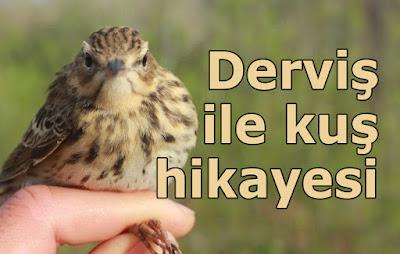 derviş, kuş, hikaye, kıssa, dini hikaye, Hz. Süleyman, hırka, cübbe, serçe, ders