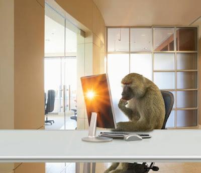 Monkey wallpaper | monkey images 2020