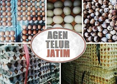 supplier telur ayam bebek puyuh Jatim
