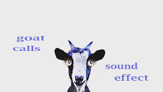 animal goat sounds