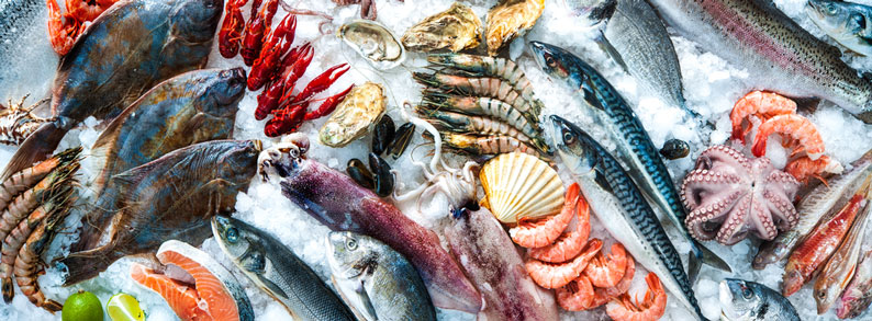 Are you interested to export fish and seafood to Romania and Eastern