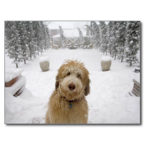 The Cutest Dog, Outside after a Snowstorm | Photo Postcard