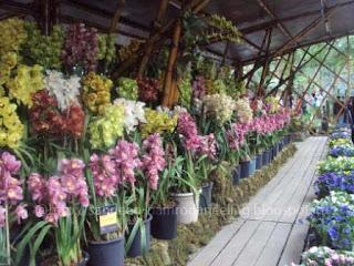 Images_International_Flower_show_sikkim
