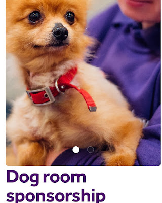 Duchess of Sussex renews her Mayhew dog room sponsorship in Adorable Archie's Name