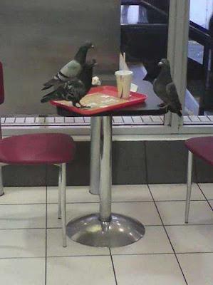 Drei Tauben sitzen am Tisch und essen lustig