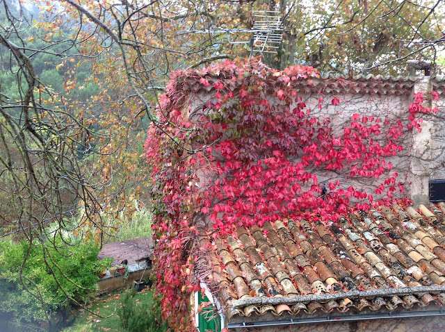 casa con hiedra roja