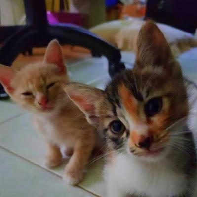 starter kit pemula pelihara kucing