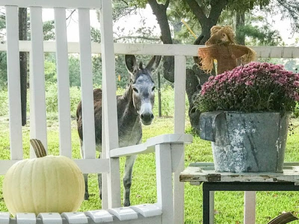Gorgeous Fall Arrangements Including a Pretty Cute Donkey