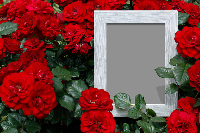 Empty Photo Frame Surrounded With Roses in Natural Environment Free PSD Template