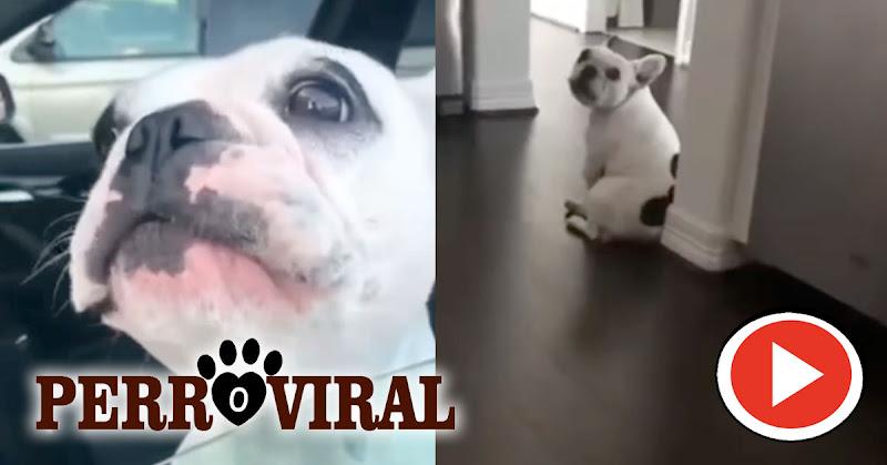 Perro demuestra su habilidades para cantar ópera
