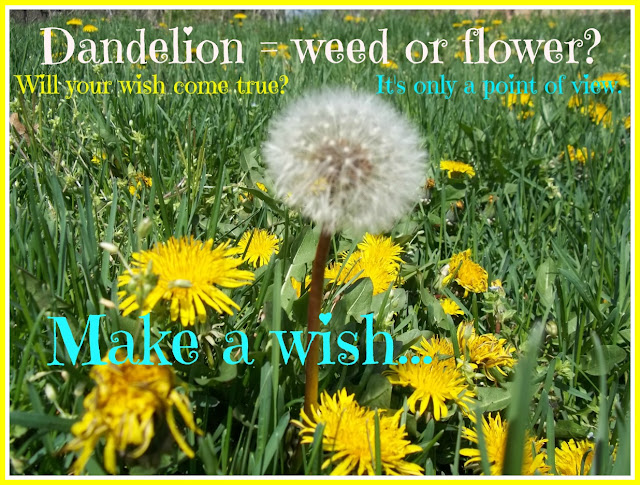 Make a wish on a Dandelion Parachute Kids inspirational sayings