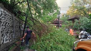 Pohon Kersen Tumbang, Timpa Kabel PLN dan Telkom