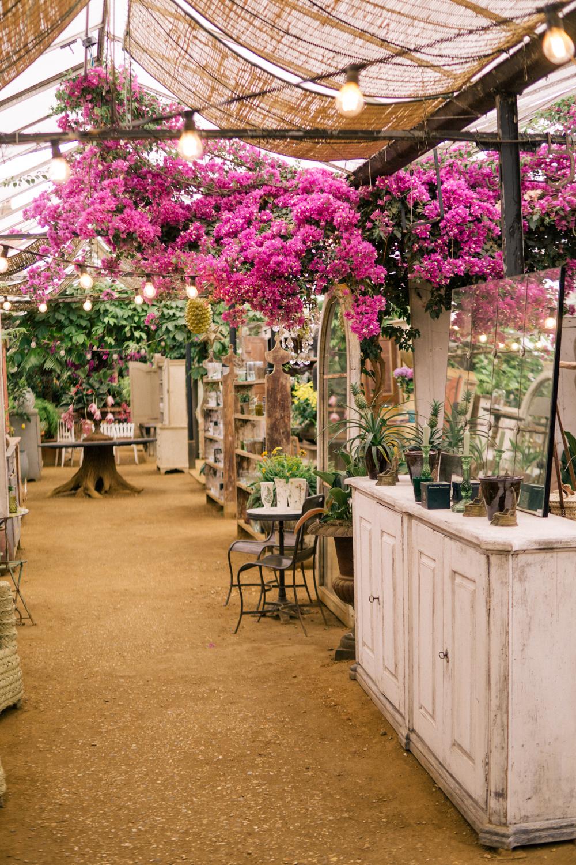 Petersham-Nurseries-photography-classic-summer-style-ootd