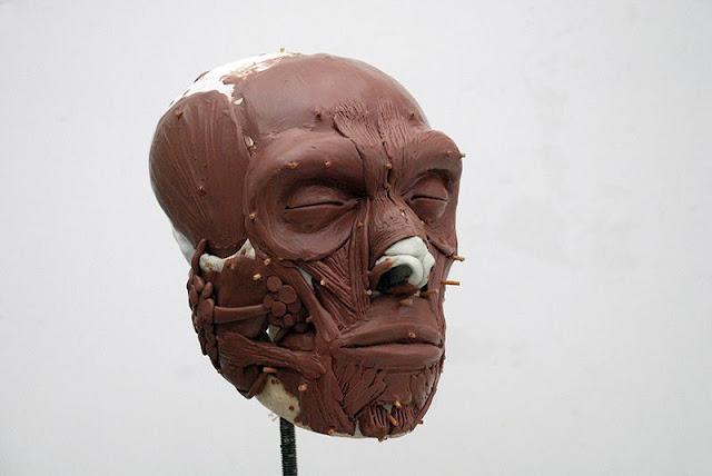 Dutch Neanderthal now has a face