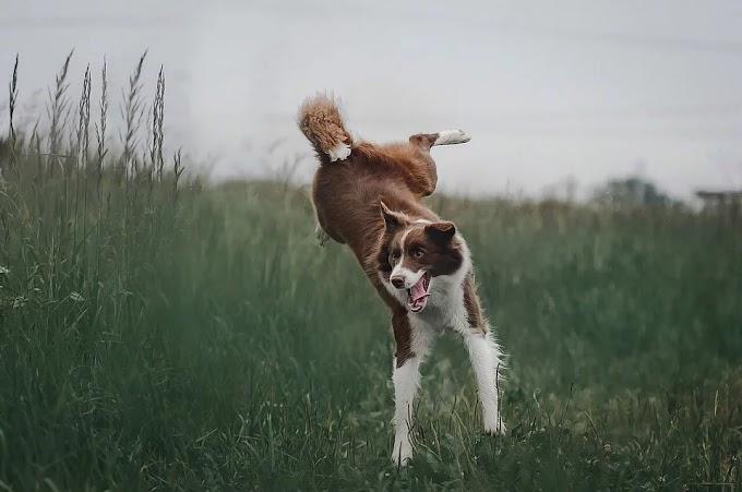 Soñar con perros saltando