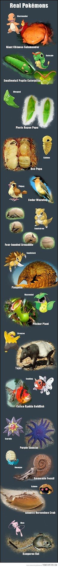 real world pokemon