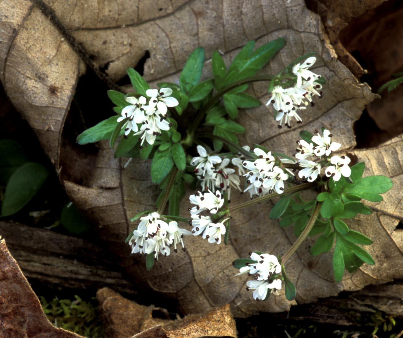 Kentucky Native Plant and Wildlife: February 2013