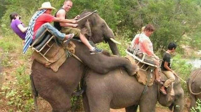 Kejamkah jika menunggang gajah? Irresponsible tourism?