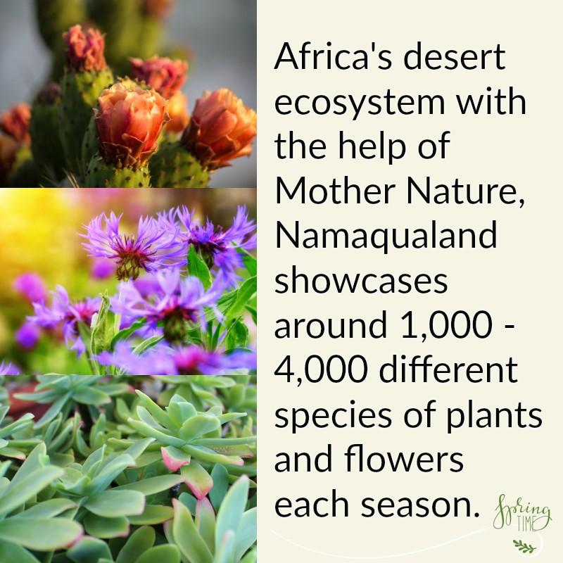 Africa's desert ecosystem