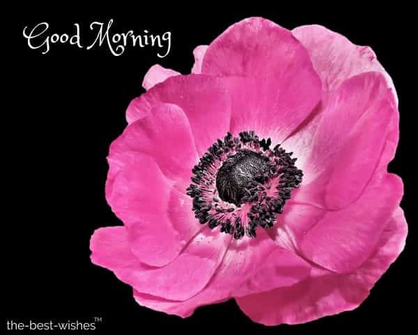 good morning pink flower images free download
