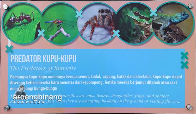 predator kupu-kupu scientia square park tangerang