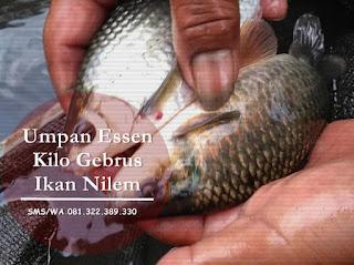 Essen Ikan Nilem Kilo Gebrus