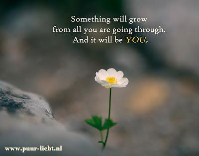 groei, opbloeien, puur-licht, in je kracht