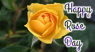 Happy Rose Day images, Pictures & Wallpapers 2020 HD