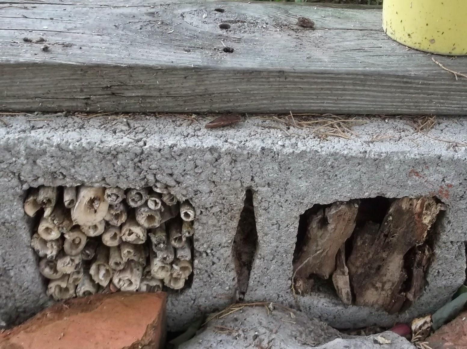 Secrets Of A Seed Scatterer Bug Hotels Under Construction
